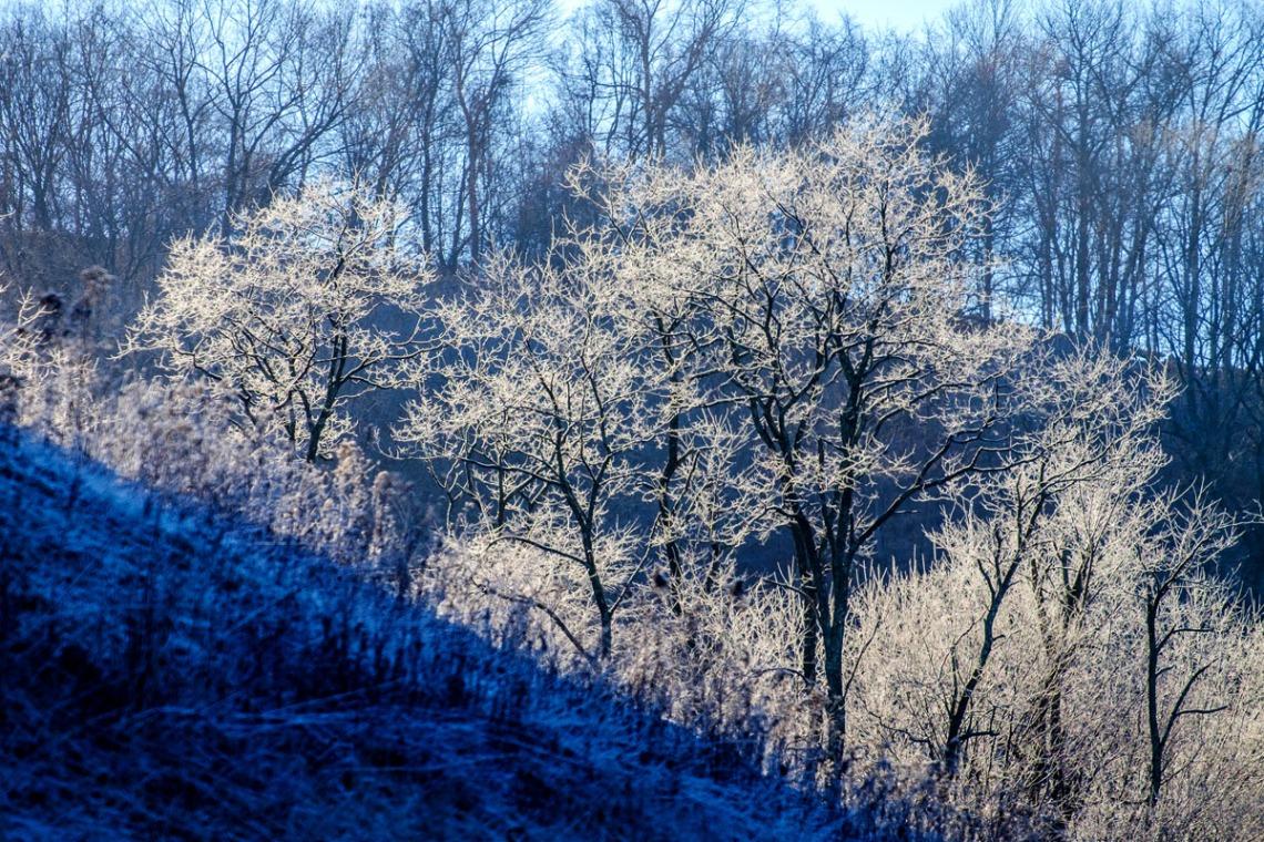 Frosty Trees_sm